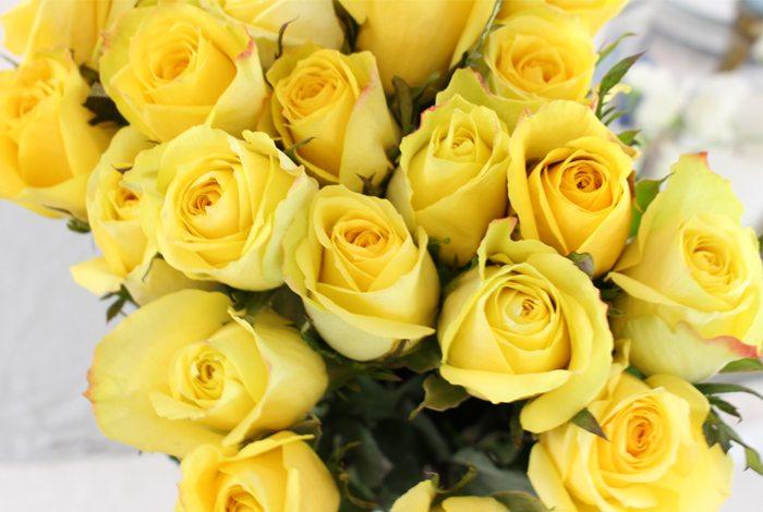 brighten roses sm