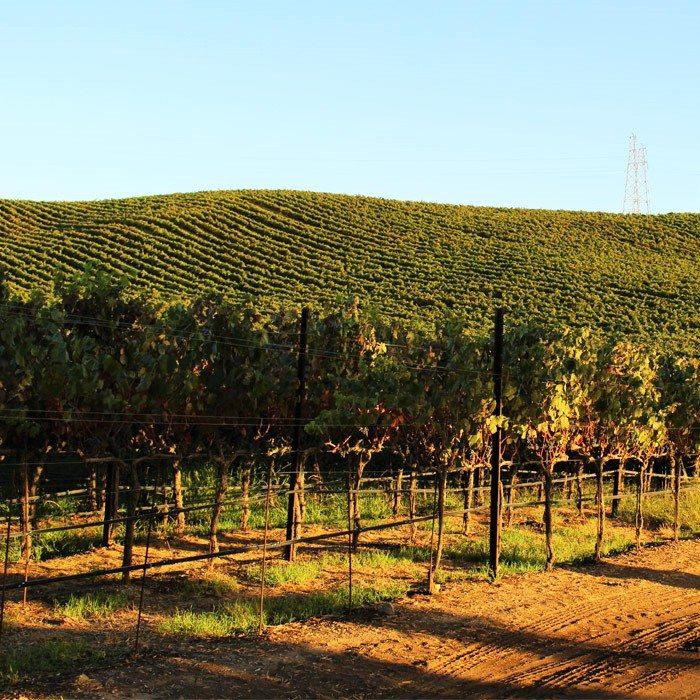 wente-tour-vineyards-sm-ver