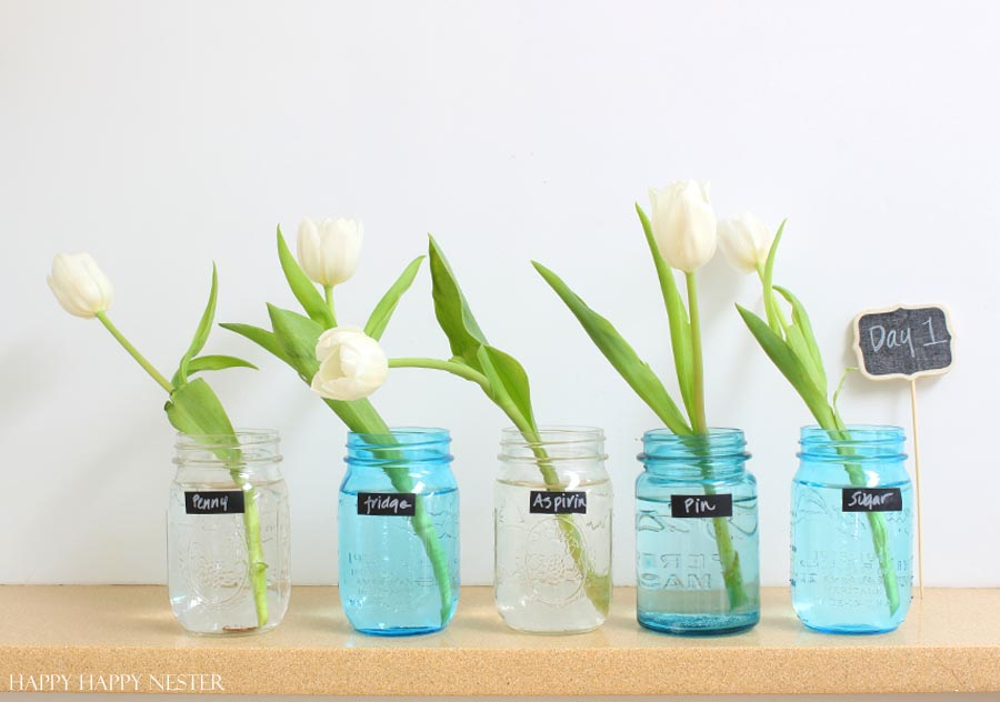 tested what makes flowers last longer