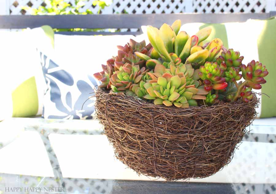 succulents for the outdoors
