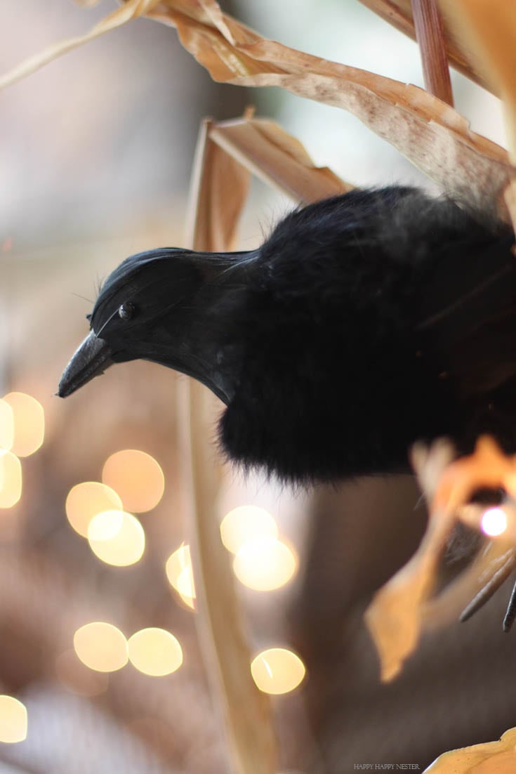 crow on cornstalk with lights in the background.