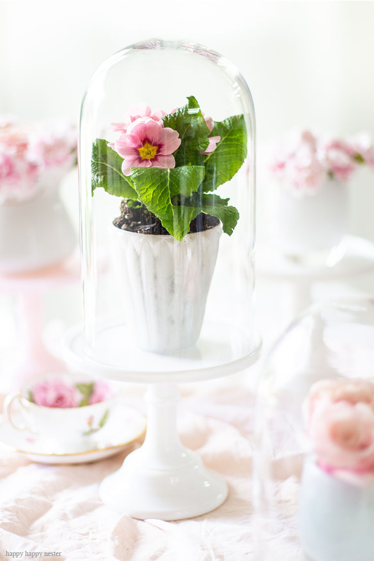Primroses under glass cloches are super cute. Cake stands are easy ways to decorate a table or your home. I have gathered some Cute Ways to Use a Cake Stand that I'm sure you'll love. You can use them for the holidays or even a wedding reception. They add drama and interest because of their styles and heights. #cakestands #decorating #weddings #flowers #decor
